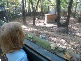 Checking out the rare Red Wolves