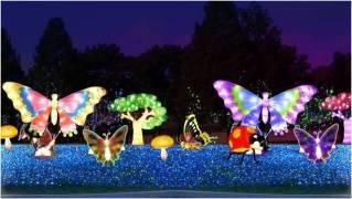 butterflies-night